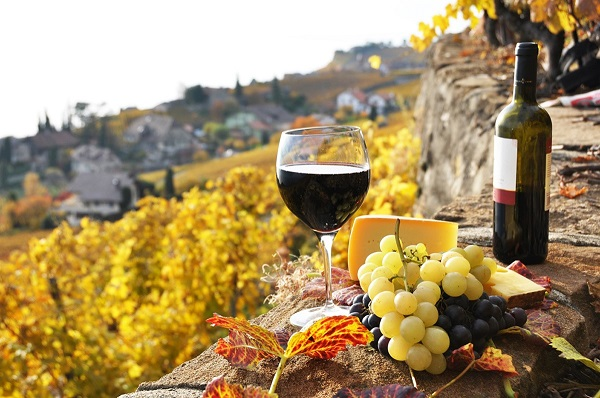 Image result for spain wine